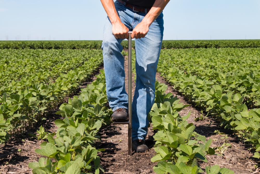 Soil,Sampling,In,Soybeans